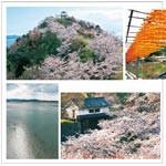 風景50+ 〜 和歌山城の桜、高津子山、片男波、四郷の串柿