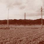 写真館⑱ 〜 河西の美田〈1956年〉