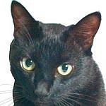 猫(真っ黒、スリムで尻尾が長い、雑種、オス、2歳、未去勢、首輪無し)がいなくなりました。