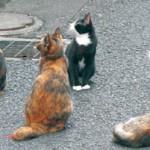 あの記事 〜 野良猫へエサをやるのダメ?