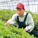 ハーブ産地化へ着々 紀の川市の今木史典さん 農家の収入安定にイチオシ 那賀振興局主催で栽培講習