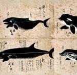 あの記事 〜 鯨を捕まえるのはダメ?