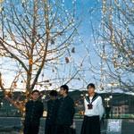 友情の灯 生徒に「また明日」 開智中 留学生が残した木を電飾
