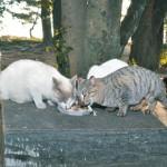 なくせるか 不幸な命 和歌山県が動物愛護管理条例改正 「地域猫」認定制度や罰則
