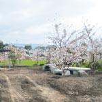 桜咲く手づくりの庭開放 紀の川市の髙橋宏さん宅