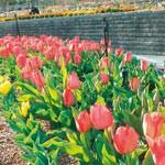 緑花センター 無料でどうぞ スイーツフェスなど催し多彩