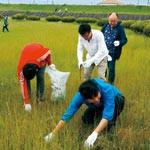 太洋工業社員 せせらぎ公園河川敷を清掃