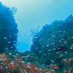 キラキラ輝く青い魚