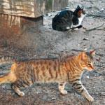 不幸な命ゼロ目指し 地域猫の不妊去勢助成