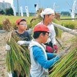 お米 たくさん収穫できたよ 山口小5年 住民が稲作指導