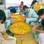 6次産業化にらみ経営指導