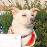 手帳で保護犬と猫支援 もか吉 チャリティグッズ完成
