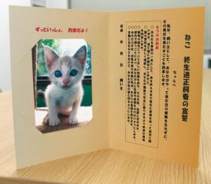 命終えるまで家族〜猫の飼い主向け宣誓書
