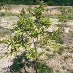 関空土採り跡再生にクヌギ 和歌山市が植樹体験会