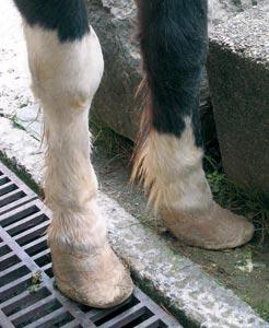170208_pony