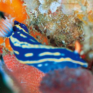 カラフルな海の宝石