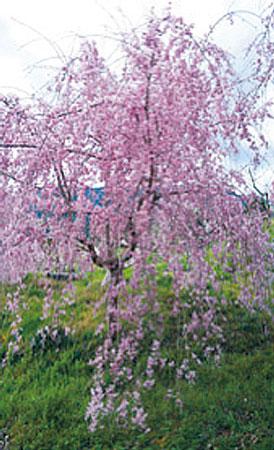 花いちばん 春のおとずれ