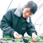 広がれ〝幸せ苺〟無農薬栽培に試行錯誤