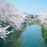 桜並木映える大門川