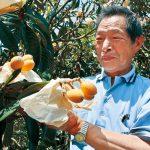 びわの季節到来 片山農園で収穫体験
