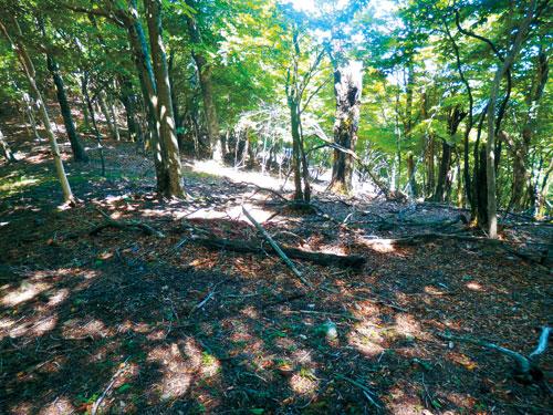 護摩壇山のブナ林守れ