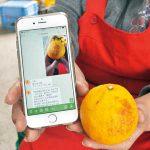 柑橘の病害虫 AIが診断