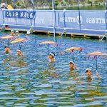 伝統の泳ぎ 大阪城の堀で