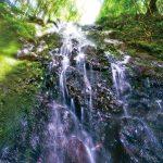 滝物語㊻ 宇宙の真理拓いた聖地〜曼陀羅の滝(田辺市龍神村)