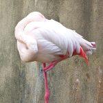 鳥の体重 どのくらい?