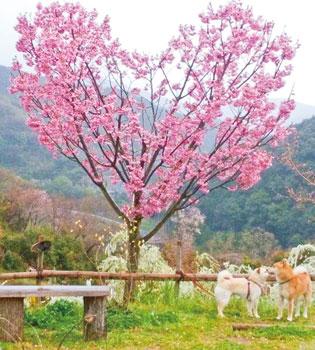 春の花の季節です〜春の花まつり