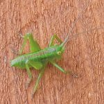 小さな昆虫 だれの子ども?