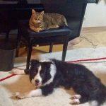 ネコとイヌの身体能力