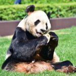 なぜパンダが和歌山に来たの?
