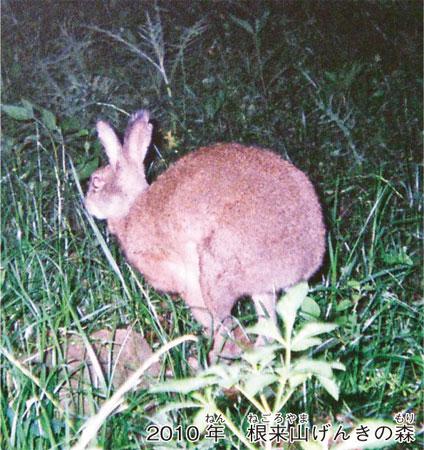 ノウサギとカイウサギ 違いは?