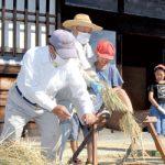 昔の道具使い脱穀体験