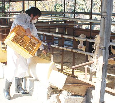 うし年記者 牛の飼育体験