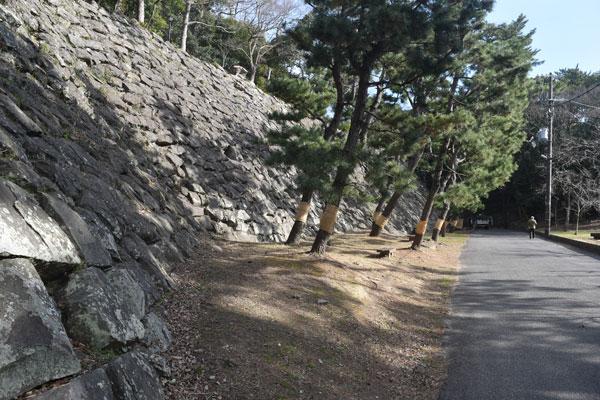 ふるさと和歌山城ワンポイント⑨新裏坂北方の石垣〜刻印の宝庫