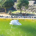 お城の動物園だより④ 水禽園