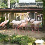 お城の動物園だより⑥ フラミンゴ